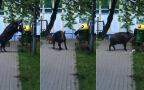 Sprytna locha na osiedlu w Sopocie