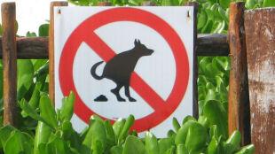 Londyn wypowiedział wojnę psim kupom. Zamierza pobierać DNA od czworonogów
